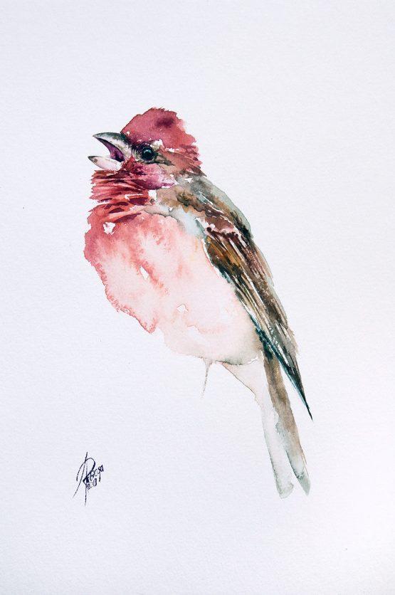 Rosefinch