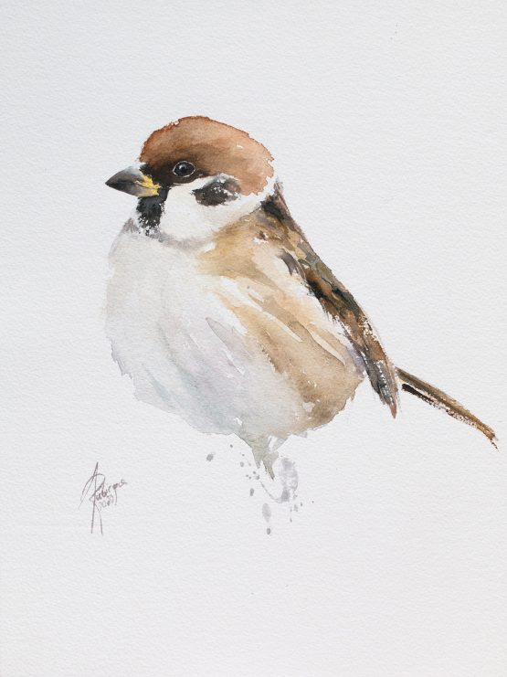 Tree sparrow / Mazurek