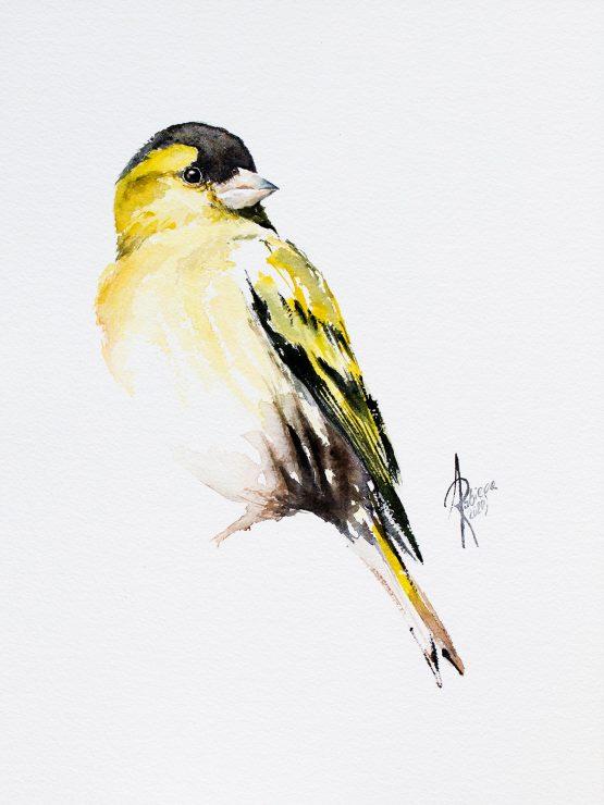 siskin watercolor