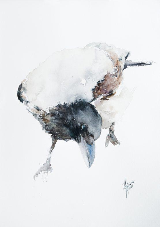Wrona siwa