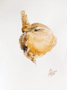 strzyżyk akwarela