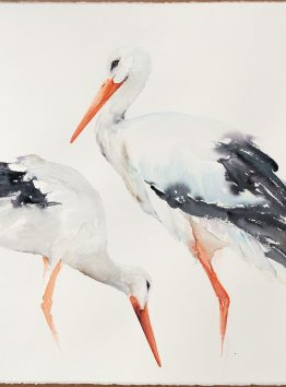 white storks watercolor