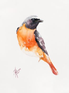 redstart - watercolour